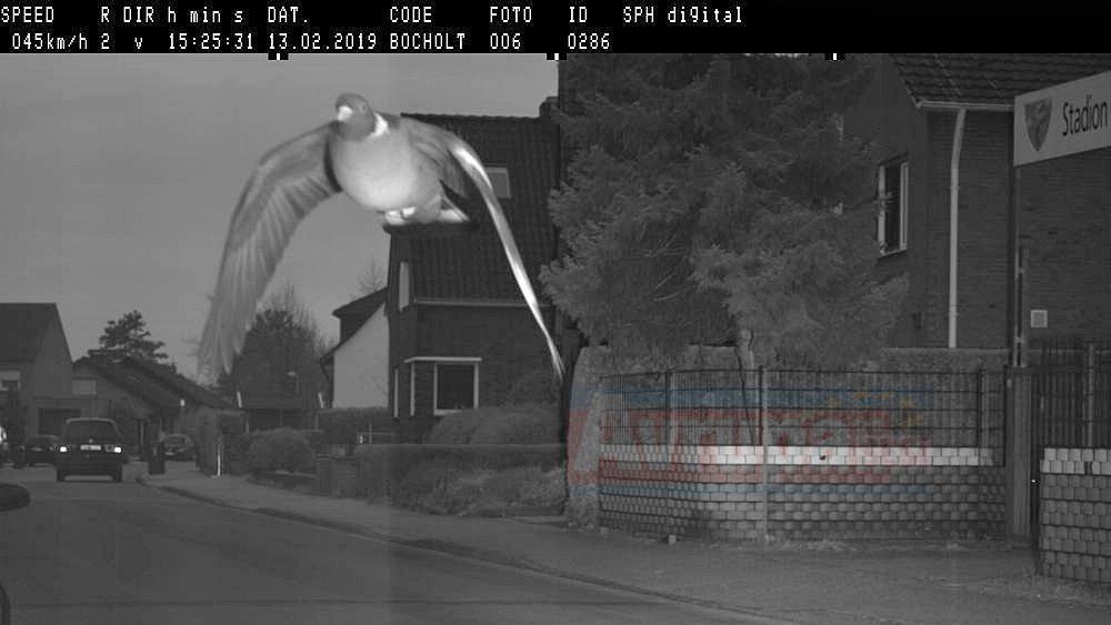 Güvercin radara yakalandı