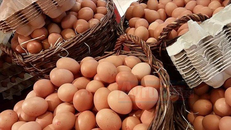 Belçika'da yumurtada dioksin bulundu