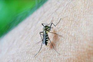 'Sivrisinekler erkekleri neden daha çok ısırıyor'