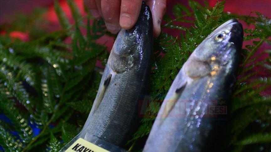 Balıkçılar 'lüferin yolunu gözlemeye başladı'