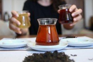 'Türkiye'de ilk kez oolong çayı üretildi'