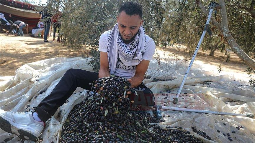 İsrail askerinin sakat bıraktığı Filistinlilere uzanan 'Zeytin dalı'