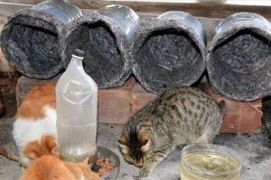 Sokak kedilerine eski damacana ve battaniyeler yuva oldu