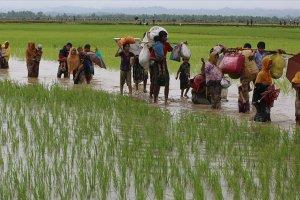 İnsan hakları örgütü Fortify Rights: Myanmar, Arakanlı Müslümanların haklarını inkara devam ediyor