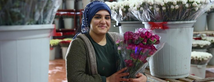 Türkiye rekor kırdı, 50 ülkeye 60 milyon dal çiçek ihraç etti