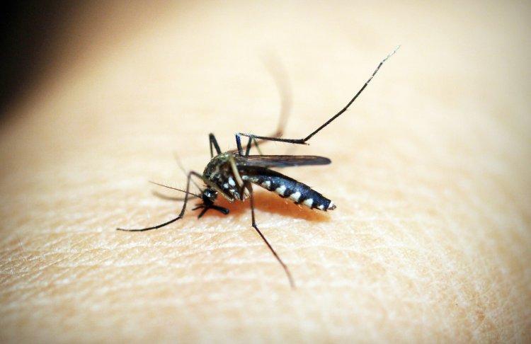 Sıtma dünya genelinde 2018'de 405 bin kişi hayatını kaybetti