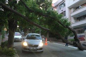Ankara'da fırtına nedeniyle ağaç devrildi