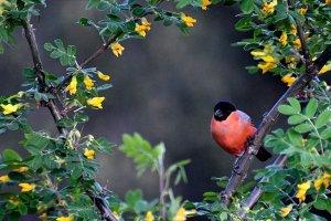 Kars Sarıçam Ormanları kuş sesleriyle şenleniyor