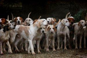 Hindistan'da eyalet hükümetinin kararı ile köpek eti satışı yasaklandı