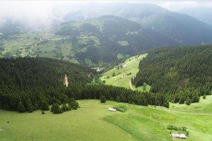 Çam ormanlarıyla cezbedici Kümbet Yaylası