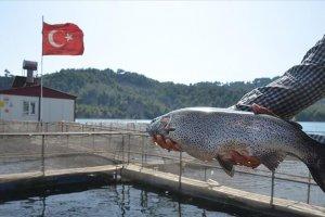 Denizi olmayan kentten milyon dolarlık balık ihracatı