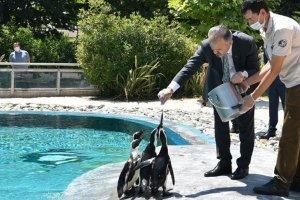 Bursa Hayvanat Bahçesi'nde yeni doğumlarla nüfus arttı