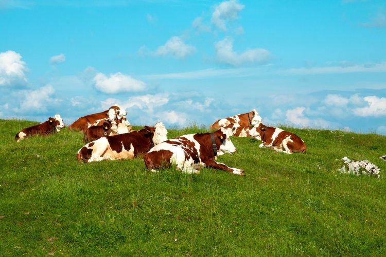 Kurbandan elde edilen et, sakatat, deri, yün ve süt gibi unsurların satılması caiz değildir