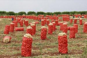 Soğan ve patates hasat ihracatı serbest bırakıldı