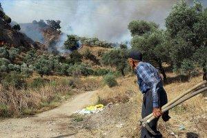 Aydın'da zeytinlik ve incirlik alanda yangın çıktı