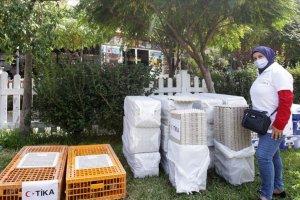 TİKA Lübnan'da tavukçuluk projesiyle kadınlara iş imkanı sağladı