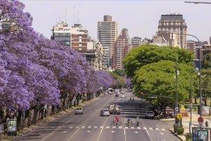 Jakaranda ağaçlarının renklerine bürünen Arjantin sokakları