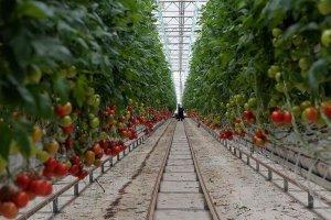 Türkiye'den yılın 3 ayında milyon dolarlık domates ihracatı
