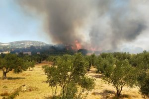 Çanakkale'nin Ezine ilçesinde çıkan orman yangınına müdahale ediliyor