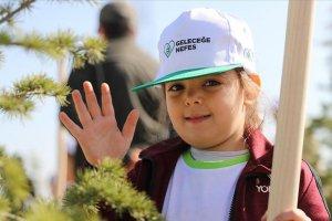 Türkiye'de bu yıl sonuna kadar 252 milyon fidan dikilecek
