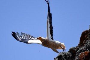 Avrupa'daki 5 kuştan biri yok olma tehlikesiyle karşı karşıya